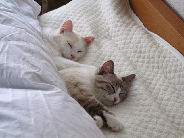眠りは時間の長さより質が大切